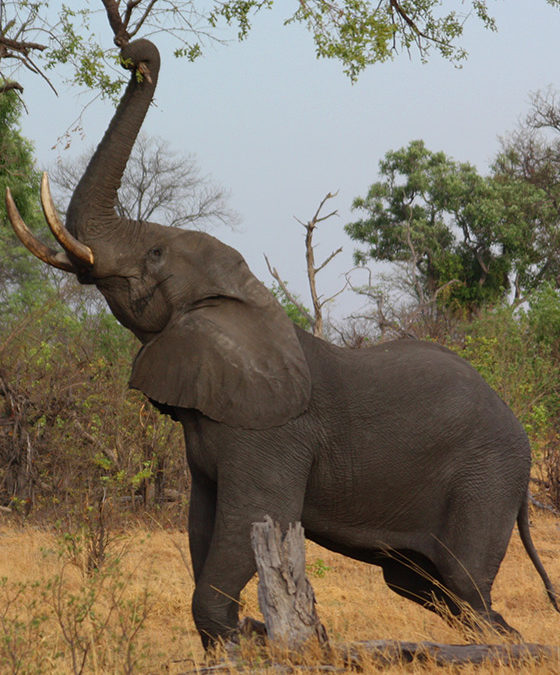 Elephant in need receive well deserved rescue